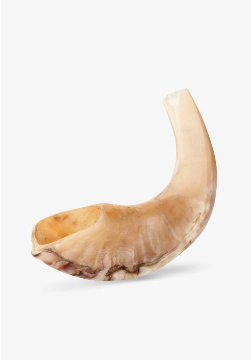 Small Polished Sheep Horn Shofar